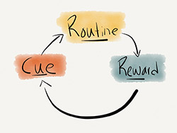 The Habit Cycle